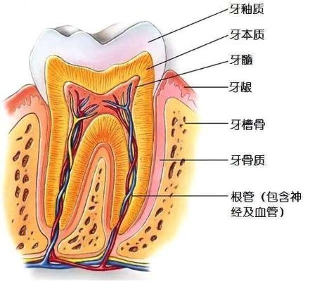 希芸舒缓防蛀牙膏防蛀牙